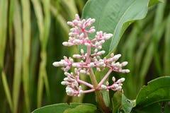 kwiat który robi nasz dniu nowej nadziei fotografia stock
