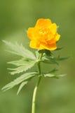 kwiat kula ziemska zdjęcie stock