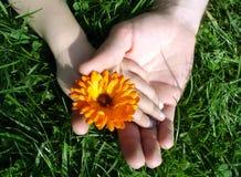 kwiat lato Zdjęcie Royalty Free