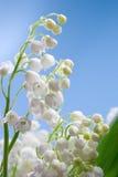 Kwiat leluja dolina zdjęcie stock