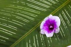 kwiat liści white storczykowy izolacji Fotografia Royalty Free