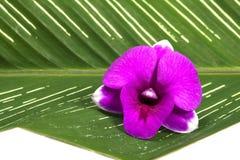 kwiat liści white storczykowy izolacji Obrazy Stock