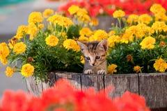 kwiat śliczna figlarka Obrazy Stock