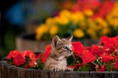 kwiat śliczna figlarka Zdjęcie Royalty Free
