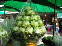 kwiat lotosu zdjęcia i sama malować akwarele białe Fotografia Royalty Free