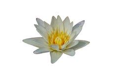 kwiat lotosu zdjęcia i sama malować akwarele białe Fotografia Stock