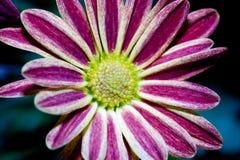 kwiat mały Zdjęcia Royalty Free