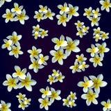Kwiat magnolia wzór Obrazy Stock