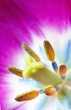 Kwiat makro- Zdjęcia Royalty Free
