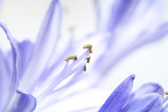kwiat makro fotografia royalty free