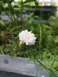Kwiat makro- fotografia Zdjęcie Stock