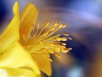Kwiat makro- strzał Fotografia Stock