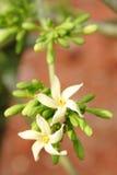 Kwiat melonowiec owoc zdjęcie royalty free