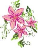 kwiat menchie Fotografia Royalty Free