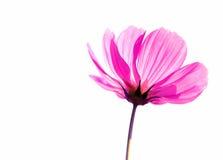 Kwiat miękka ostrość na tle Obraz Stock