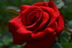 Kwiat miłość i nadzieja obrazy stock