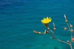 kwiat morza Zdjęcie Stock