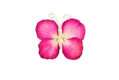 kwiat motylia prasa Zdjęcie Royalty Free