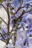kwiat mrożone Zdjęcie Royalty Free