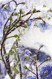 kwiat mrożone obrazy royalty free