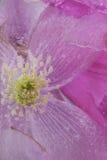 kwiat mrożone zdjęcia royalty free