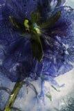 kwiat mrożone obraz royalty free