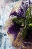 kwiat mrożone obraz stock