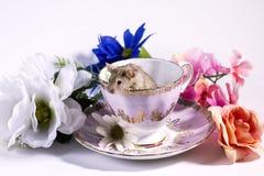 Kwiat myszy W herbacianej filiżance Zdjęcia Royalty Free