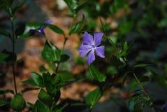 Kwiat n natura fotografia royalty free