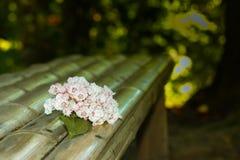 Kwiat na ławce Zdjęcie Royalty Free