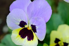 kwiat na blisko, Obraz Royalty Free