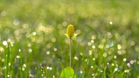 Kwiat na bokeh tle obraz stock