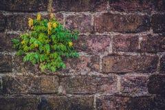 Kwiat na brickwall Zdjęcie Royalty Free
