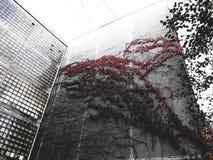 Kwiat na domu zdjęcia royalty free