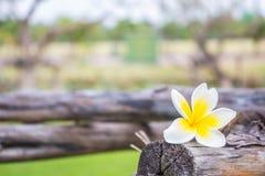 Kwiat na drewnianym Zdjęcia Royalty Free