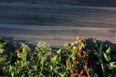 kwiat na drewnie Zdjęcie Royalty Free