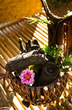 Kwiat na flowerpot Obraz Stock
