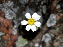 Kwiat na kamieniu zdjęcia royalty free