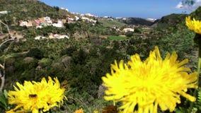 Kwiat na krajobrazie zbiory