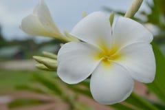 kwiat na natury tle fotografia royalty free