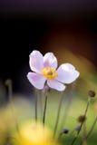 Kwiat na naturze Zdjęcia Stock