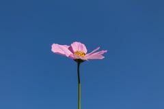 Kwiat na nieba tle Zdjęcia Stock