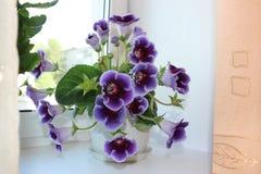 Kwiat na okno Zdjęcia Stock