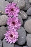 Kwiat na otoczakach obrazy stock