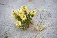 kwiat na plaży Obrazy Royalty Free