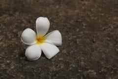Kwiat na podłoga obrazy royalty free