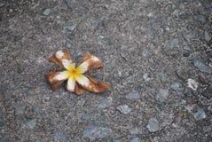 kwiat na podłoga Obraz Royalty Free