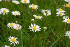 Kwiat na polu Obrazy Stock
