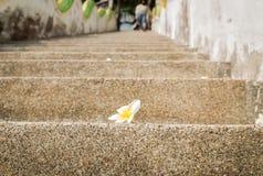 Kwiat na schodku Obrazy Royalty Free