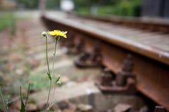 Kwiat na stronie zdjęcie stock